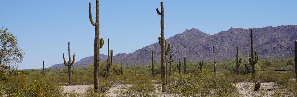 © 2018 Louise Levergneux. Sonoran Desert, Arizona