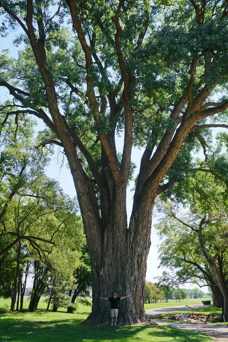 © 2018 Louise Levergneux. Tree huggers beware! City Park in Lincoln Center, Kansas / Écolos prenez garde ! City Park à Lincoln Center au Kansas