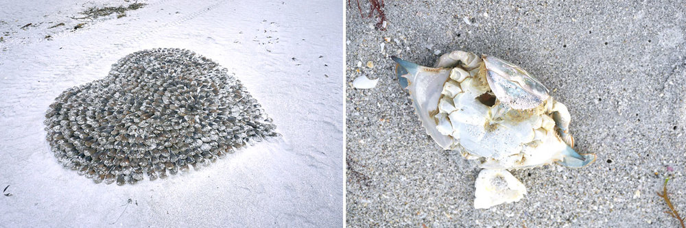 © 2019 Louise Levergneux. At 7:30am on Lighthouse Beach, one can find all kinds of interesting things! /  À 7h30 sur Lighthouse Beach, on peut trouver toutes sortes de choses intéressantes !
