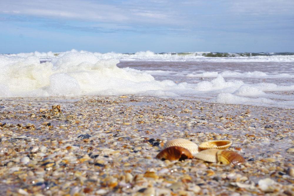 © 2019 Louise Levergneux. More shelling at St Augustine Beach. /  Encore une fois, la récolte sur la plage St Augustine.