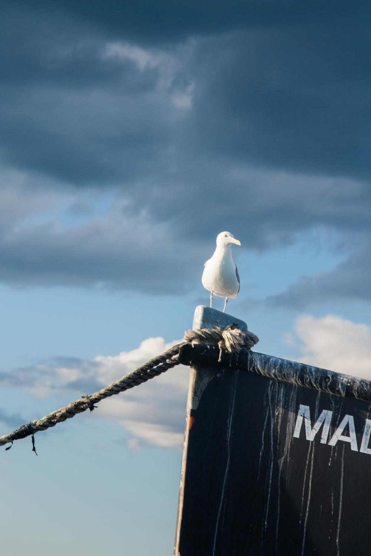 Sailing1-7.jpg
