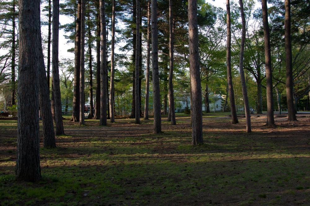 Landscape-7.jpg