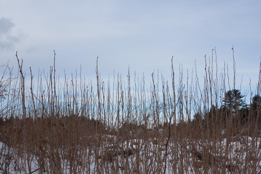 Nature-9.jpg