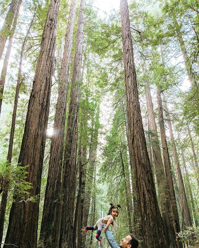 w i l d // 🌲 // . . . . . . . #kirasirinda #subjectlight #vsco #vscocam #makeportraits #theoutbound #goexplore #exploremore #liveauthentic #livefolks #loveauthentic #wanderlust #westcoast #peoplescreative #visualsoflife #exploretocreate #justgoshoot #passionpassport #welltraveled #letsgosomewhere #redwoodforest #muirwoods #sanfrancisco #california #babyofinstagram #travelersnotebook #littleadventurer #littleexplorer