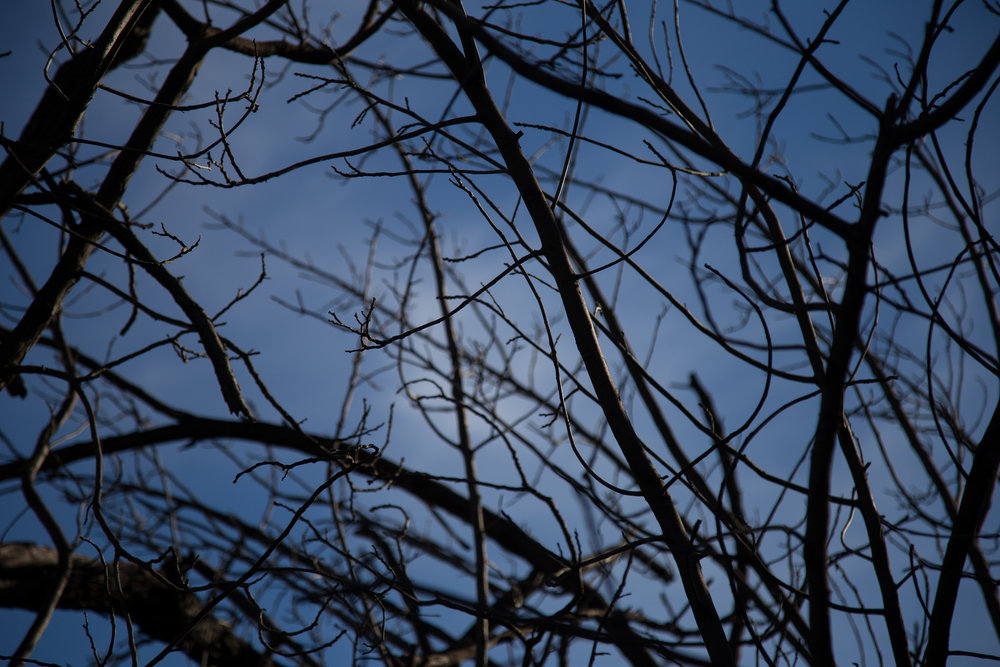 Branches, sky and clouds.
