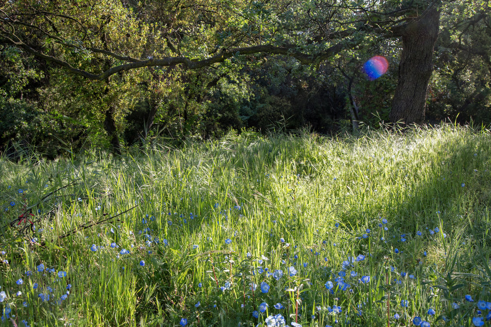 Sometimes I am lucky enough to catch a fairy orb.  This one was spotted in the magical meadow that is just starting to bloom with wildflowers.