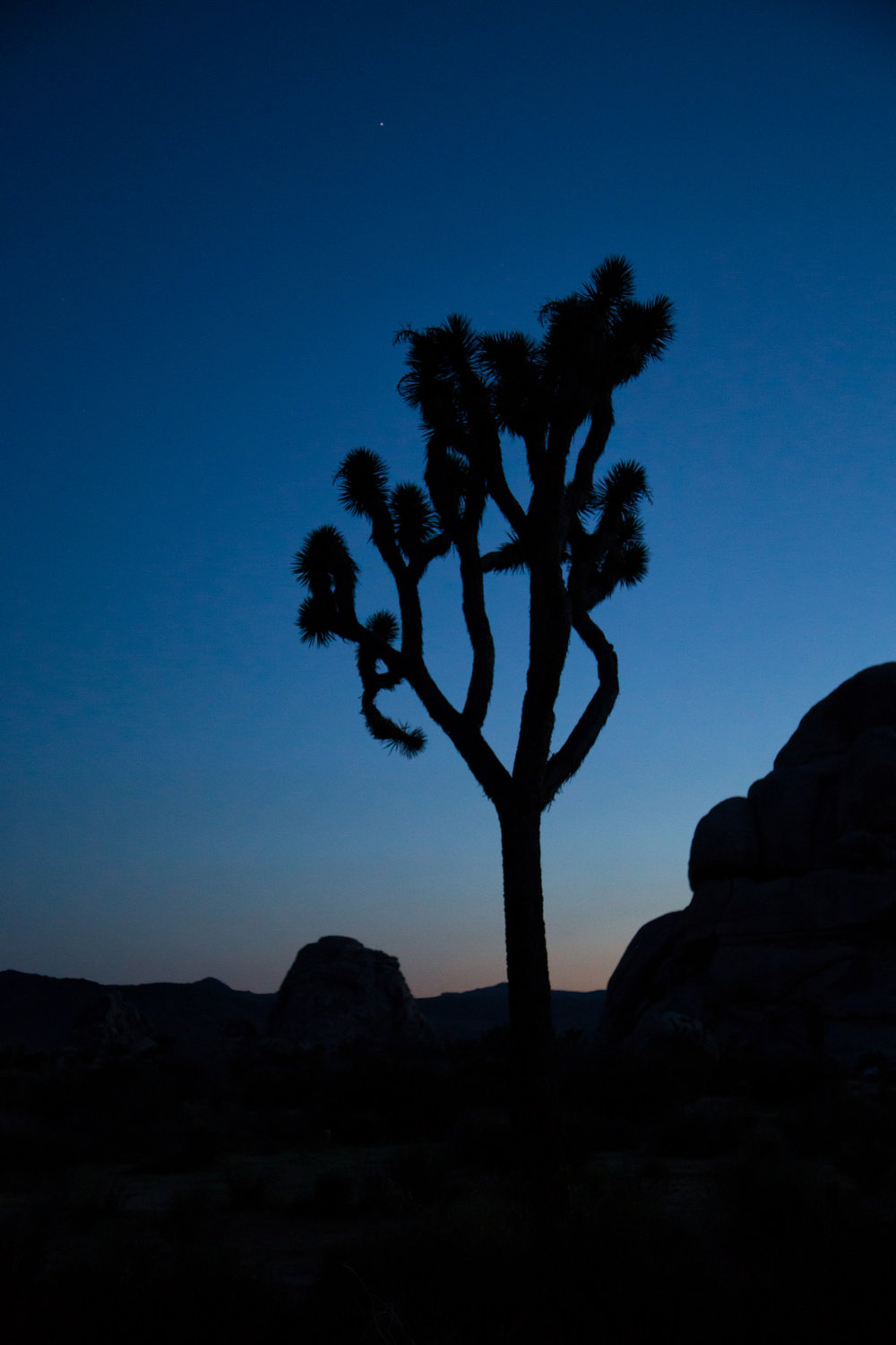 Joshua Trees at Hidden Valley Trailhead just after sunset