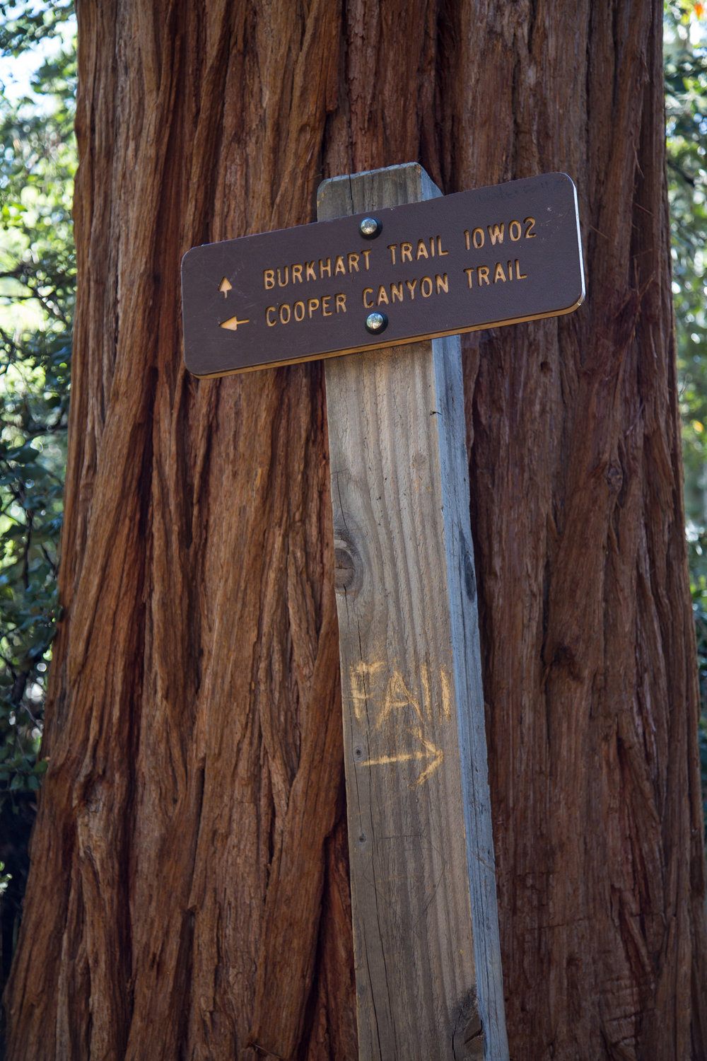 At this junction, follow the Burkhart Trail to the falls (not Cooper Canyon).
