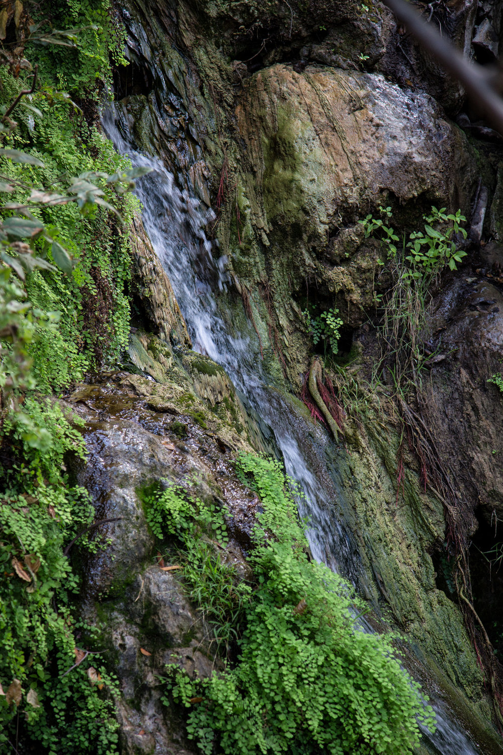 Solstice Canyon Falls.  It's a little waterfall, but it's very pretty.  Beautiful maidenhair fern along the canyon walls.