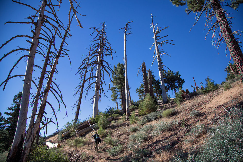 Damage from the 2002 Curve Fire.