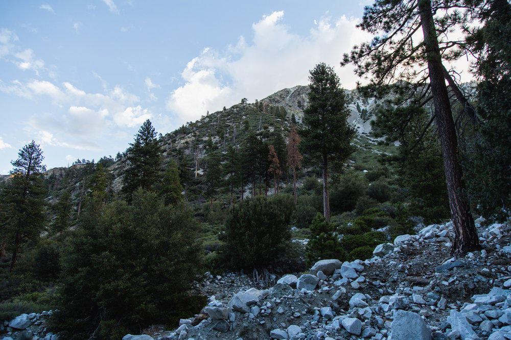 Just as the sun came up, the trail opened up to Cucamonga Wilderness. **don't forget to pick up a free permit to enter**