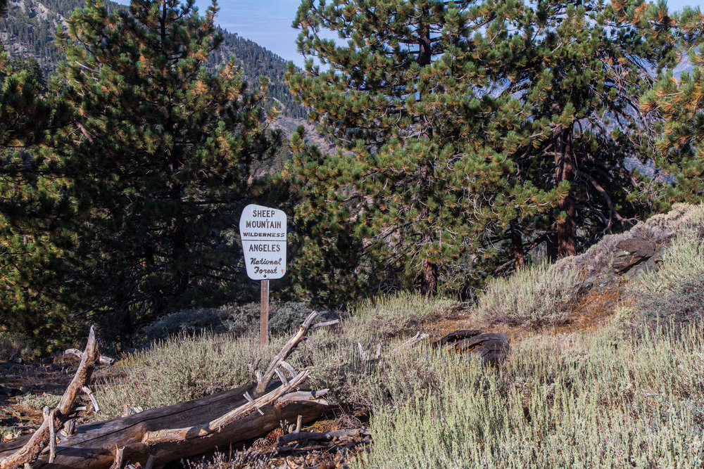 This is the trail marker at the border of the Sheep Mountain Wilderness. This trail leads to the North Backbone. You can journey to Pine Mountain, Dawson Peak and Mount San Antonio from this trail.