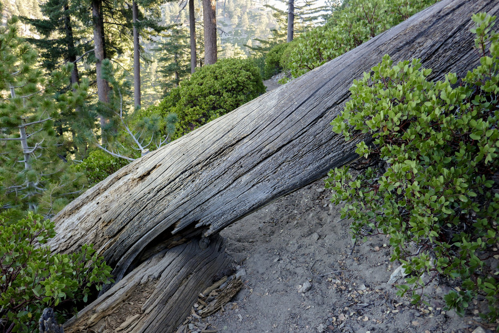 There were a few downed trees on the Ontario Peak Trail that we had to hop over.