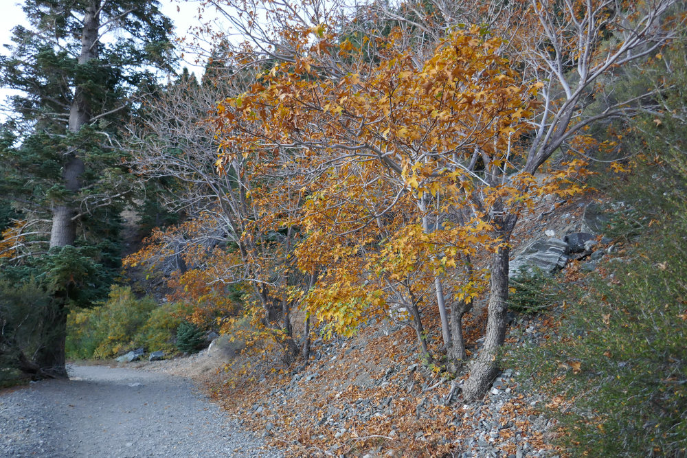 Fall colors along the trail.