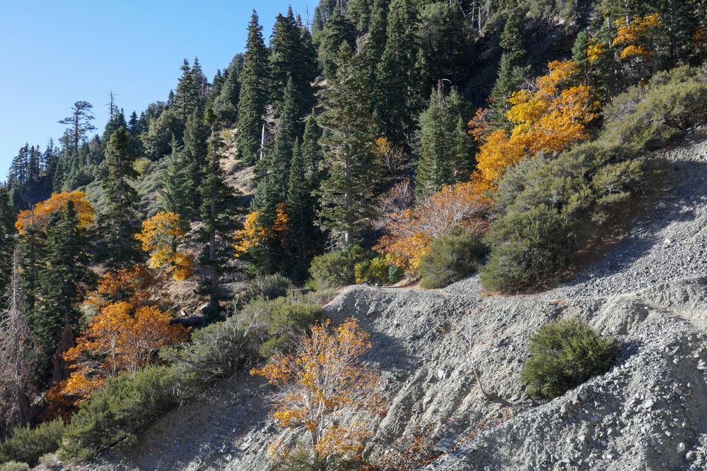 Looking back at the rocky trail winding around Mount Baden-Powell.