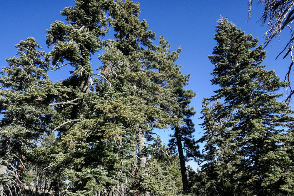 Enjoying the pine trees and crisp mountain air.