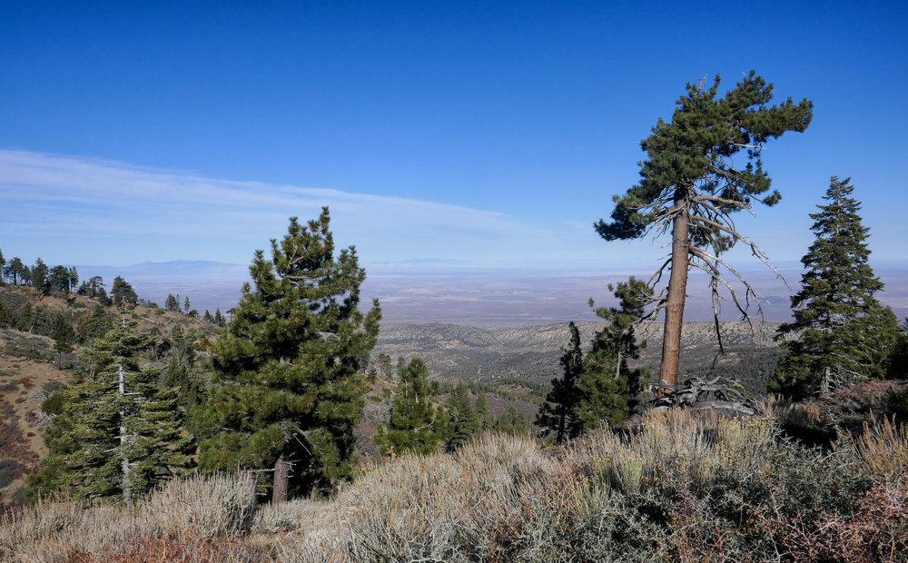 Views of the desert.