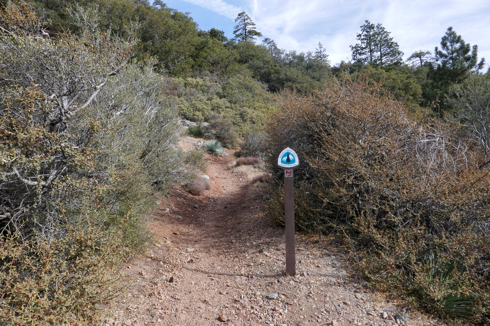 PCT marker at the end of this stretch of trail in Vincent Gap.