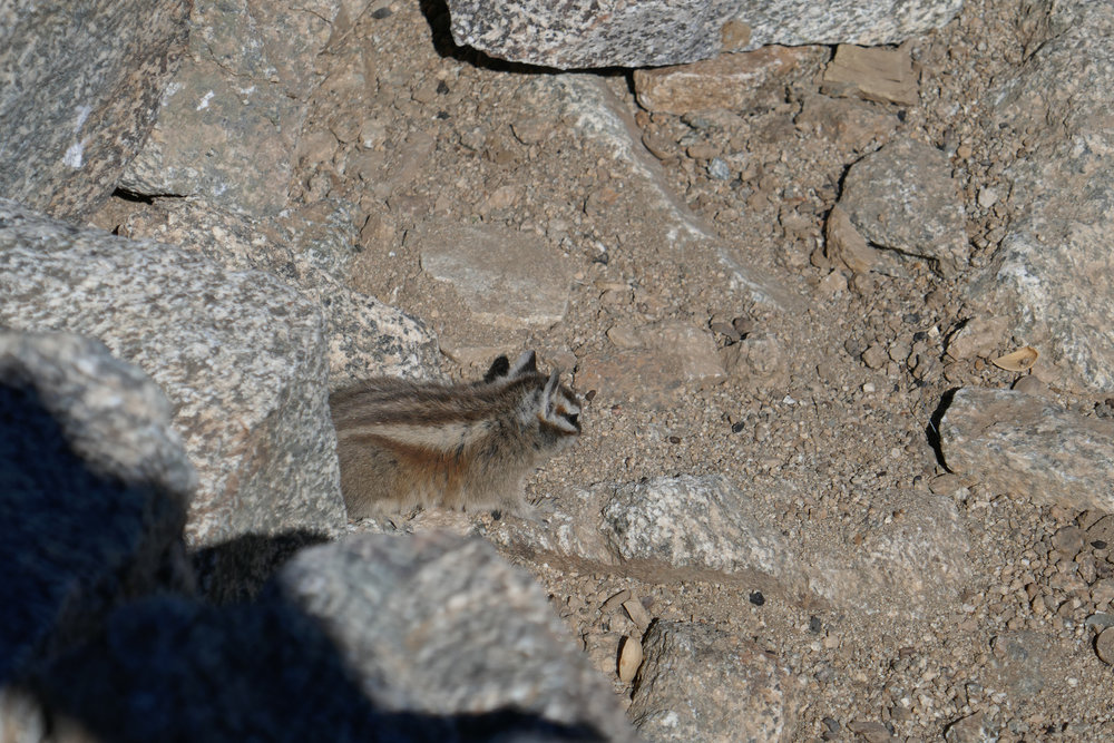 The chipmunks are pretty tame up here. I guess they're used to people feeding them.