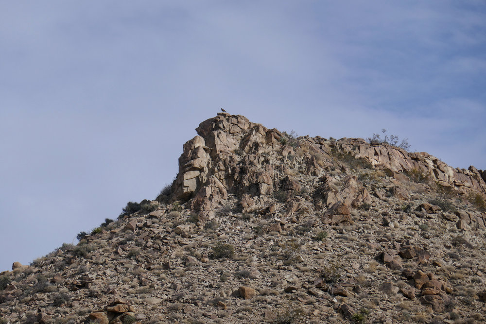 Very large bird up there. I believe it may have been a golden eagle.