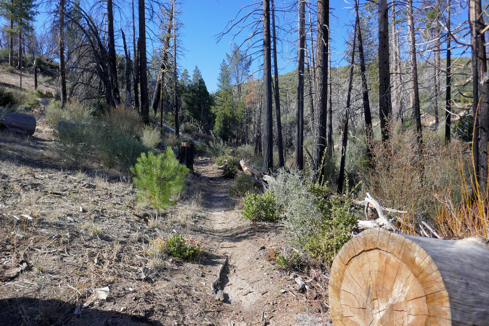 You can see the fire damage here, but look how nicely they've cleaned up the trail.  I'm so grateful for the people who do this work so that people can enjoy hiking through these beautiful places.