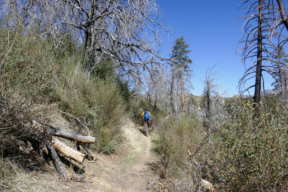 Silver Moccasin Trail