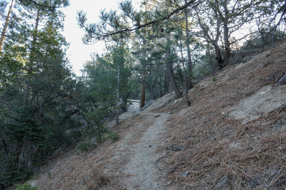 I love when trails are covered in pine needles.