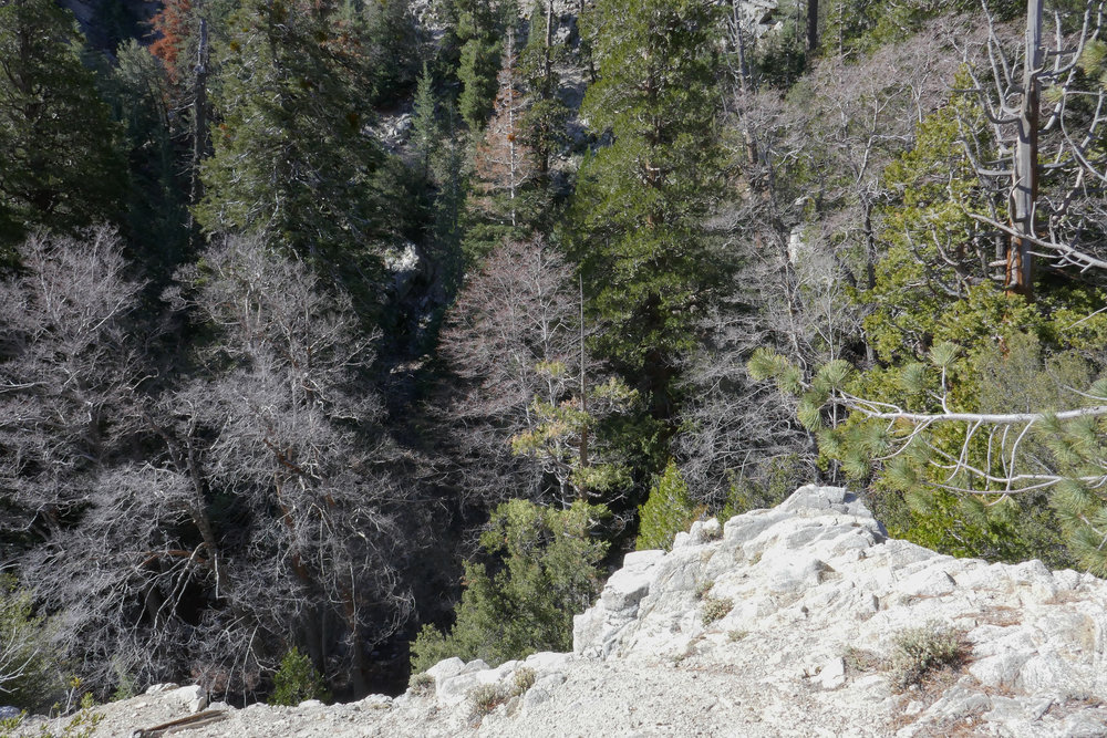 Looking down into the canyon.
