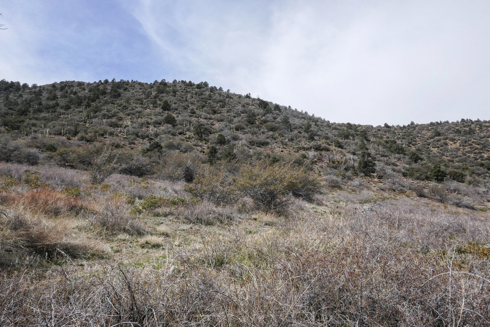 Finally getting back to the meadow and looking back up at the trail.