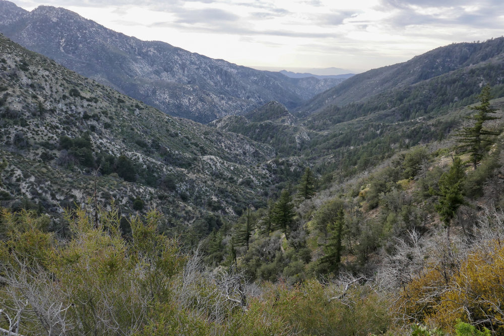 Looking down into the San Gabriel Wilderness and Devil's Canyon.