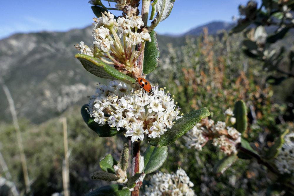 Lots of wildlife activity; ladybugs, butterflies, bees.