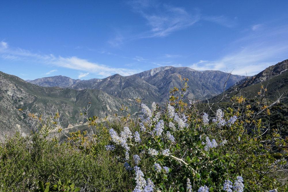 Mount Baldy.