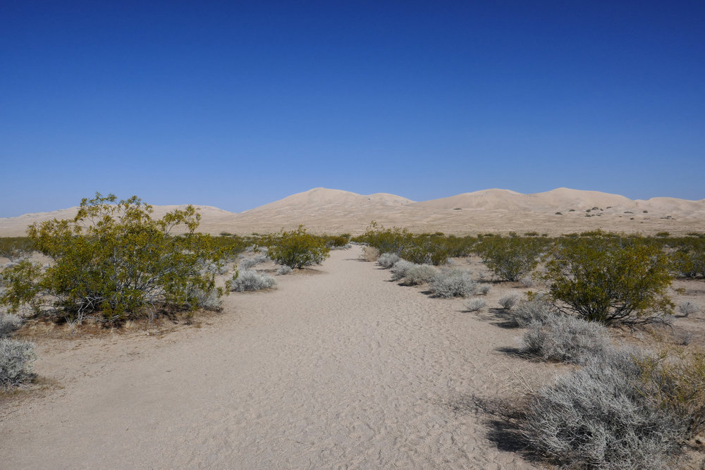 Most of the hike is flat until you start getting closer to the dunes.