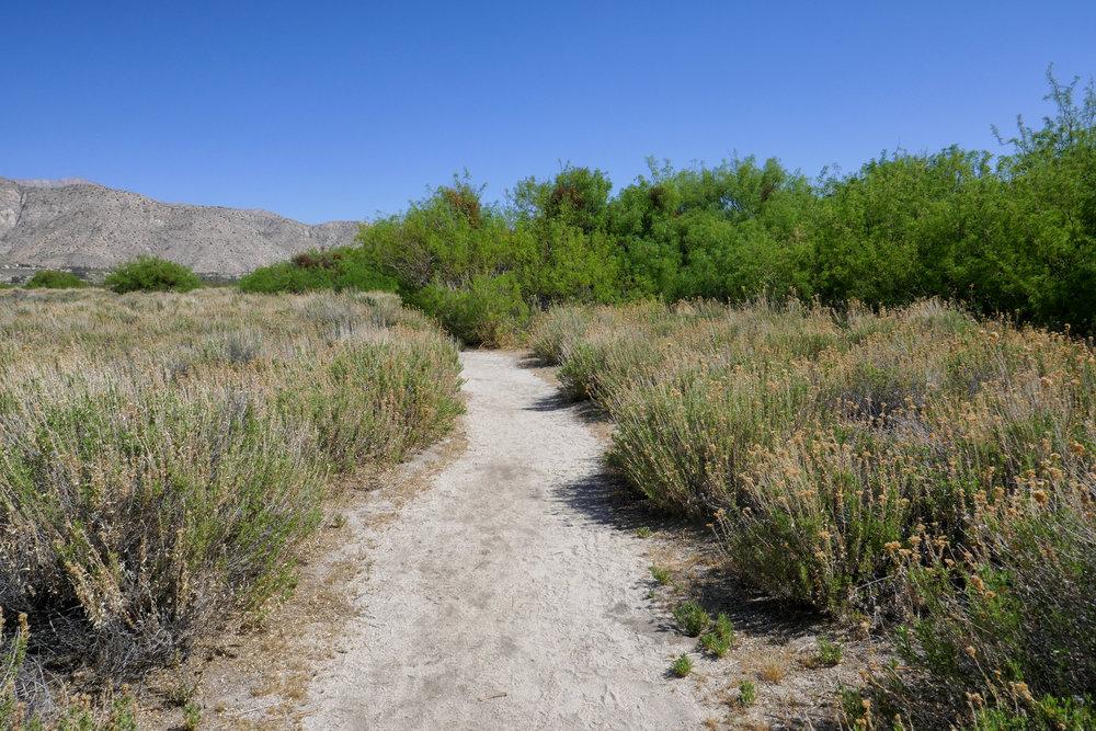We headed left onto the Desert Willow Trail.