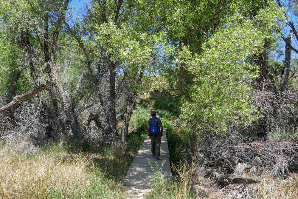 And now we loop around back to the Mesquite Trail and did a loop around the Marsh Trail.