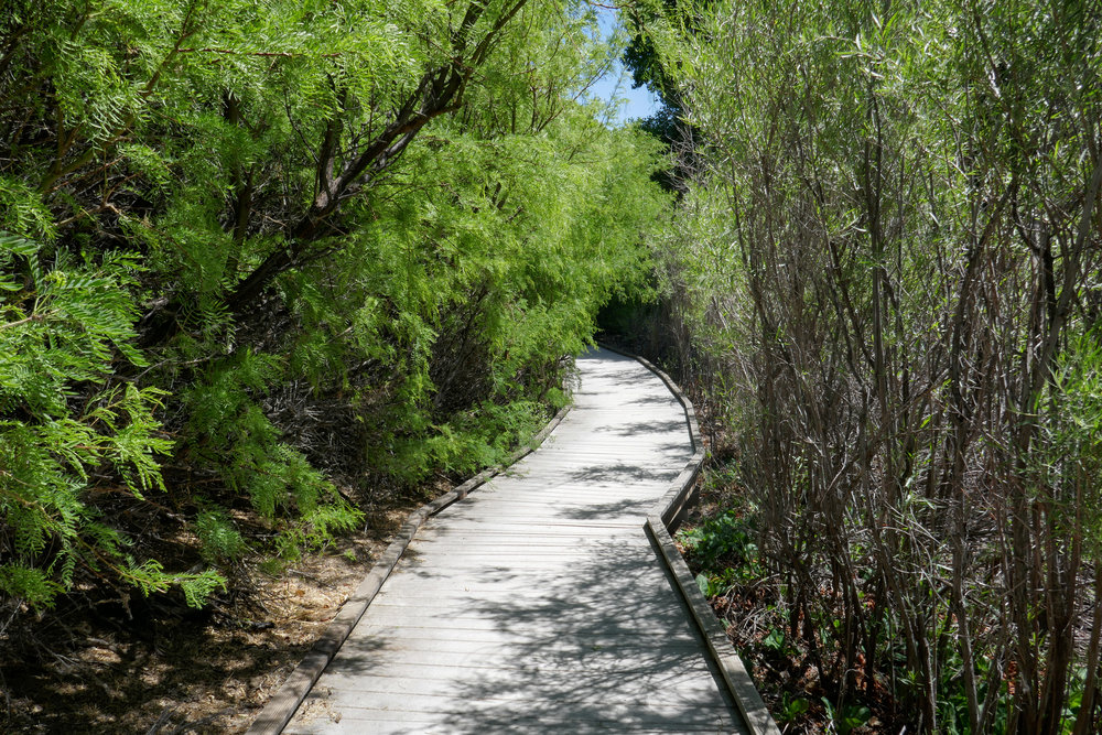 The Marsh Trail is very pretty. The boardwalk guides you around the stream under cottonwoods and willows.