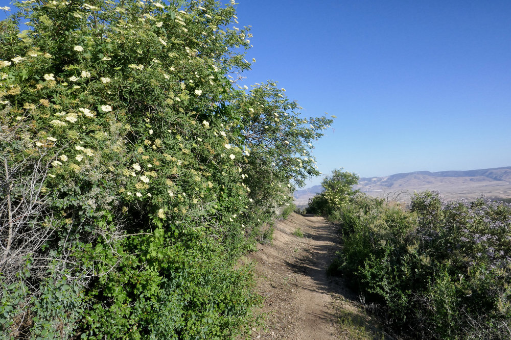 Beautiful wildflowers and views of the Tehachapi mountains.