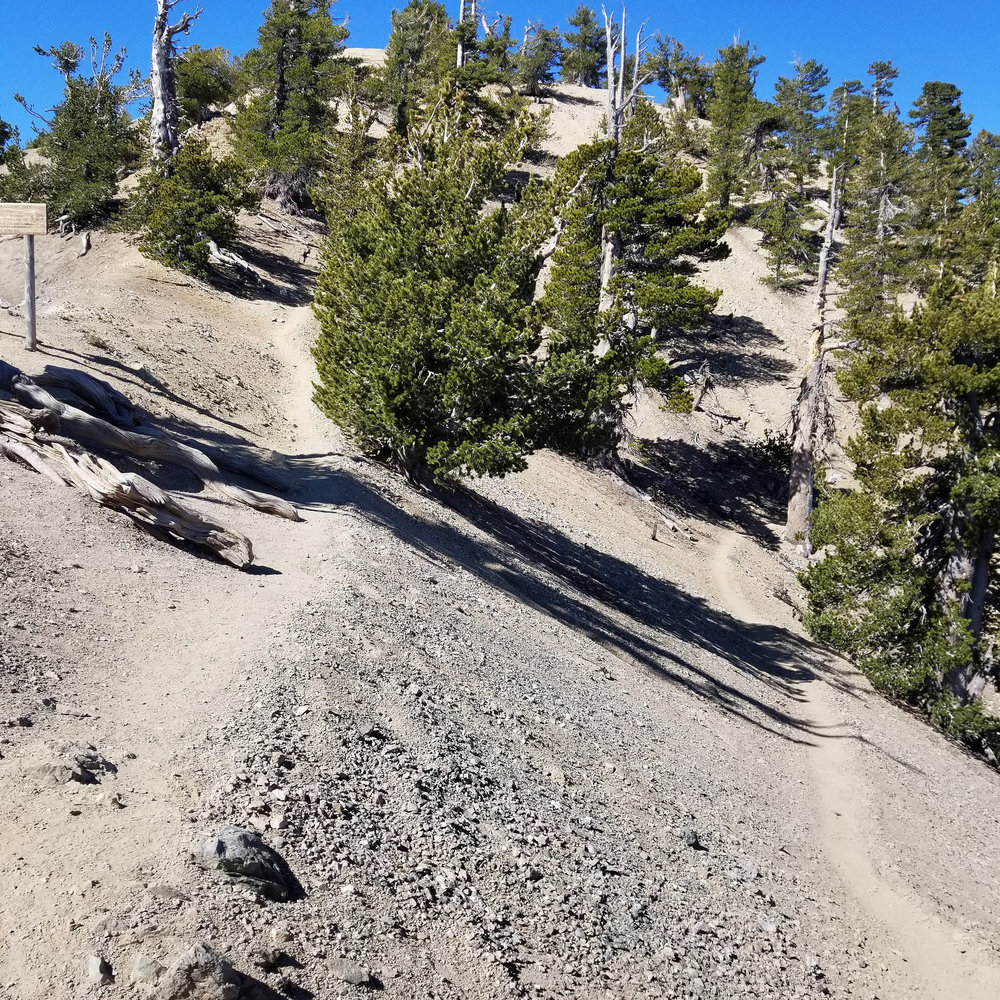 This is the junction where the PCT meets up with the trail coming up from Vincent Gap.
