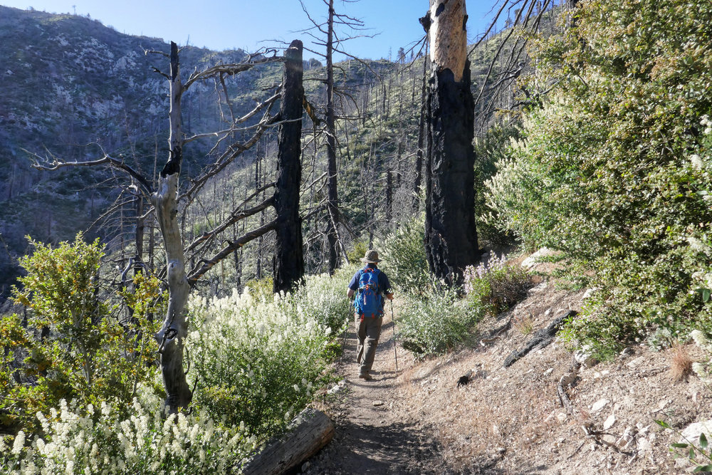The trail was pretty with a mix of trees charred by the 2009 station fire and blooming wildflowers.