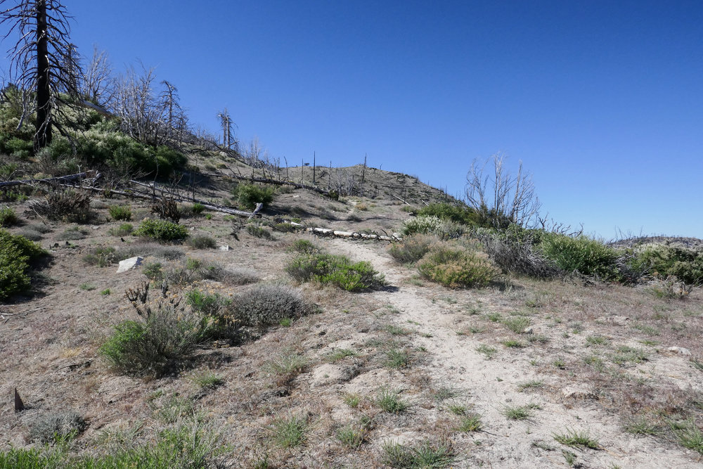 From what I read in my trail book, you can also take this trail that splits off to the right but it's a bit steeper.  It meets up with the PCT again later at the junction to the summit.