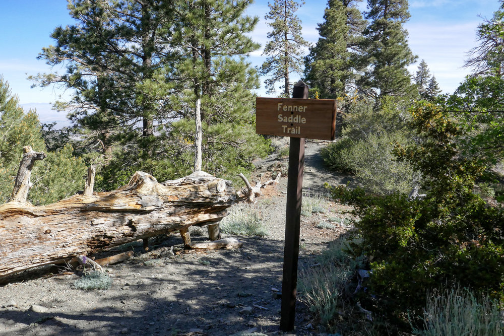 This is the junction for the Fenner Saddle Trail.  We continued on the Boy Scout Trail until it ended and looked for service road 3N26.