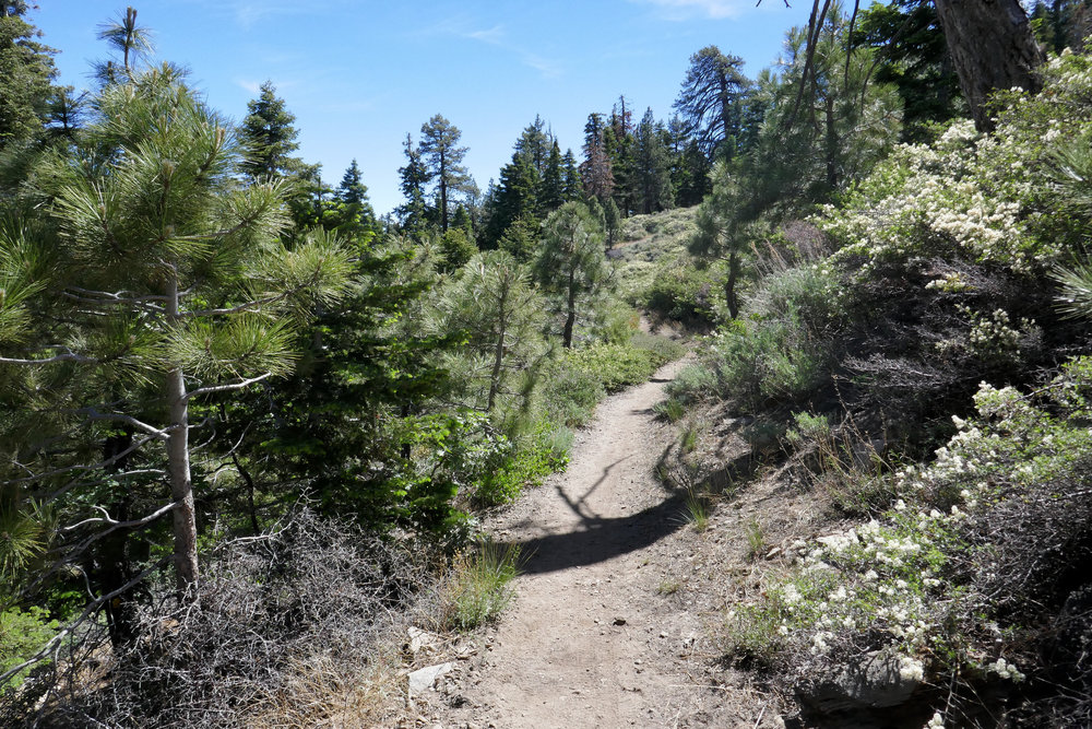 The PCT is so pristine.