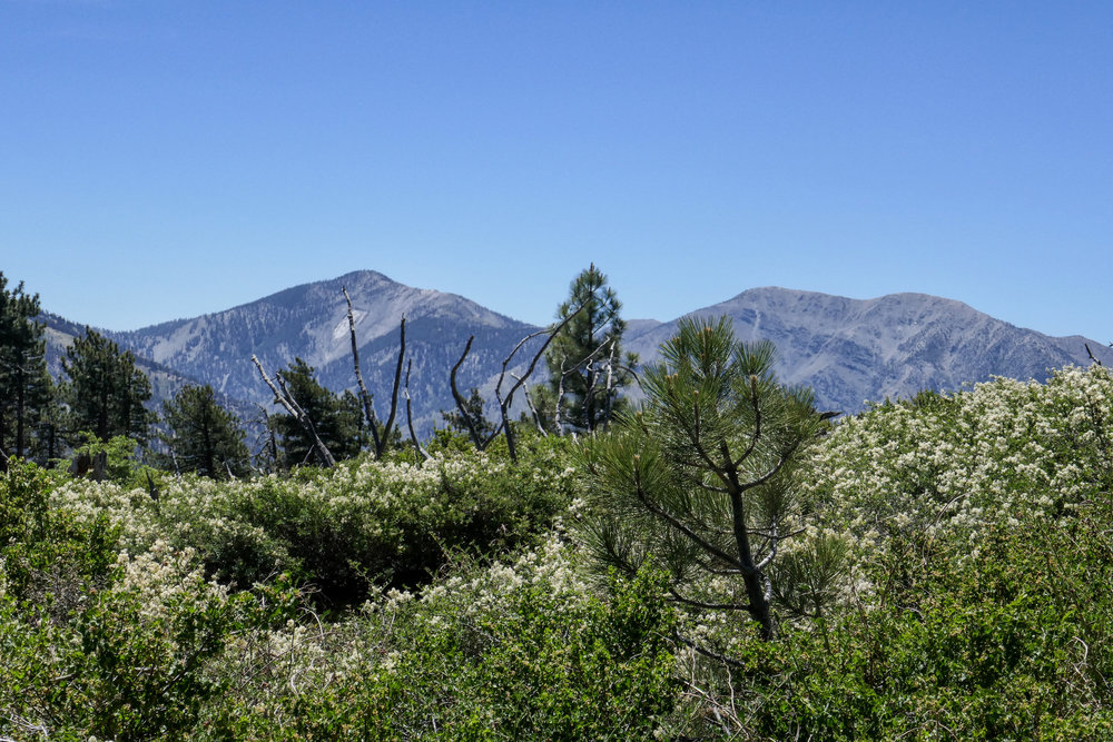 A close up shot of Pine Mountain to the left and Baldy and West Baldy to the right.