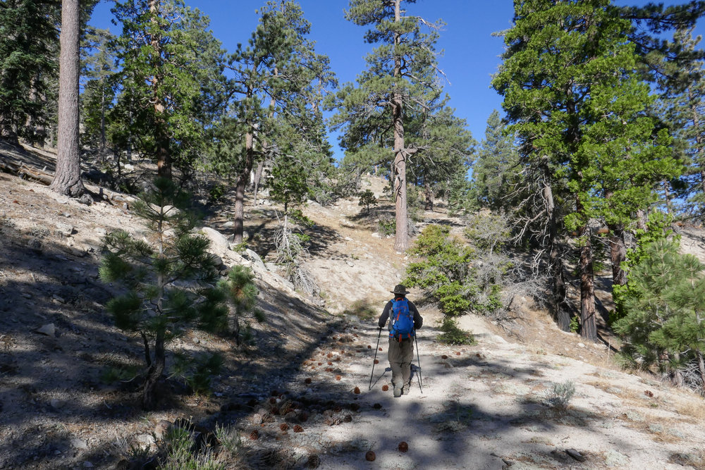 The beginning of the hike is on a somewhat established trail that starts off very easy to follow.