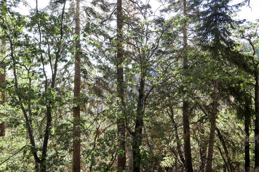 Beautiful scenery on the Blue Ridge Trail.