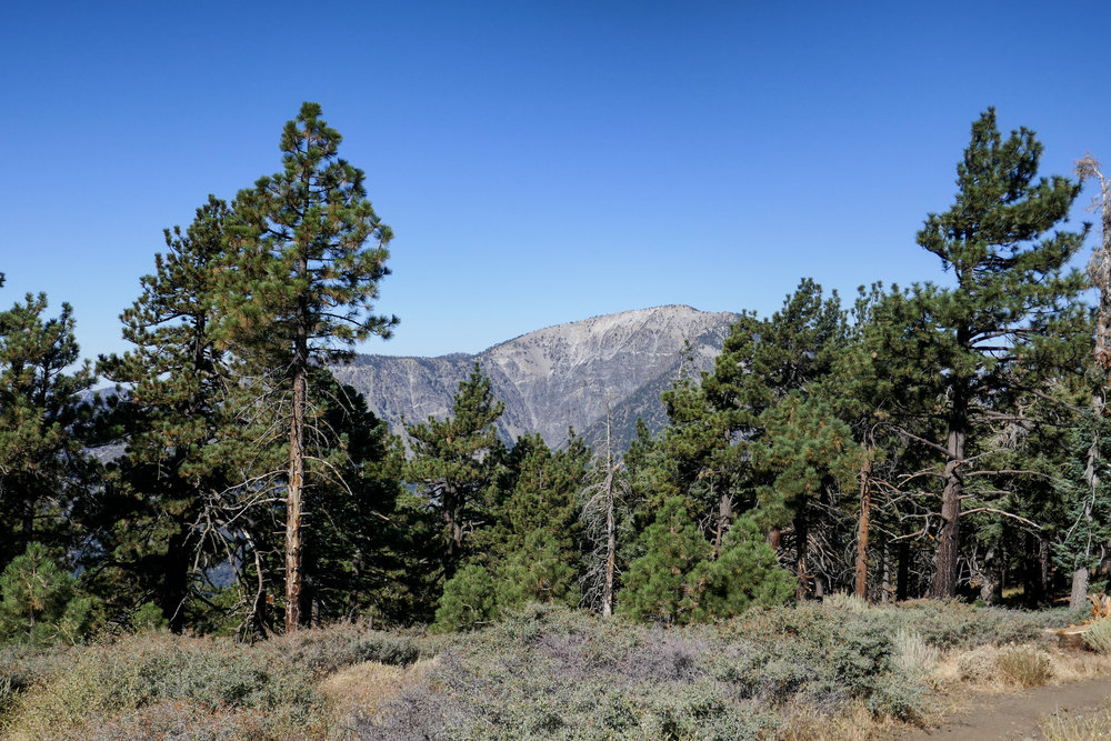 Looking over at Mount Baden-Powell.