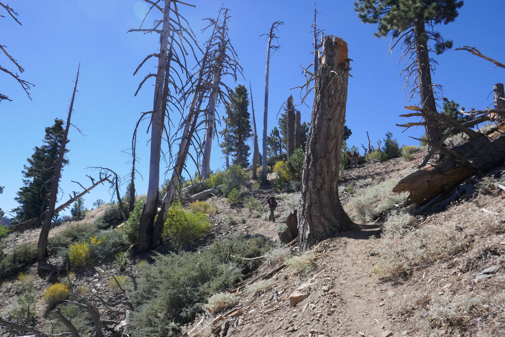 As we continue up, the trail becomes more exposed. I believe these trees were damaged in the Curve Fire of 2002.
