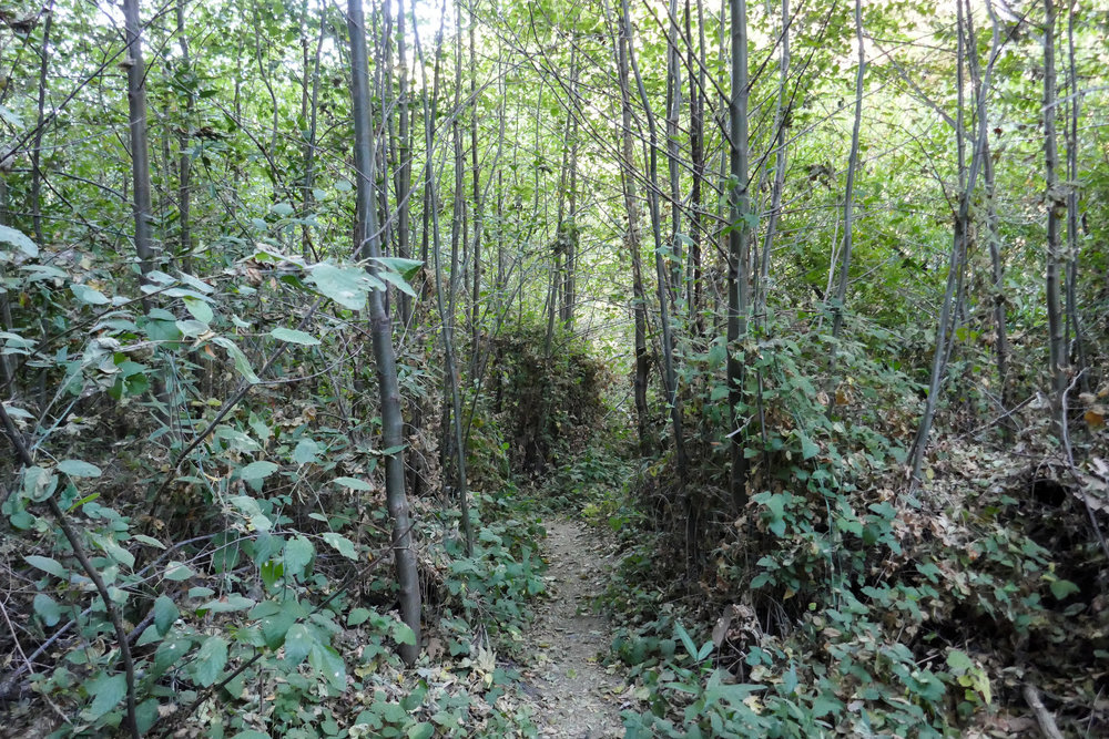Parts of the trail were full of lush green vegetation.