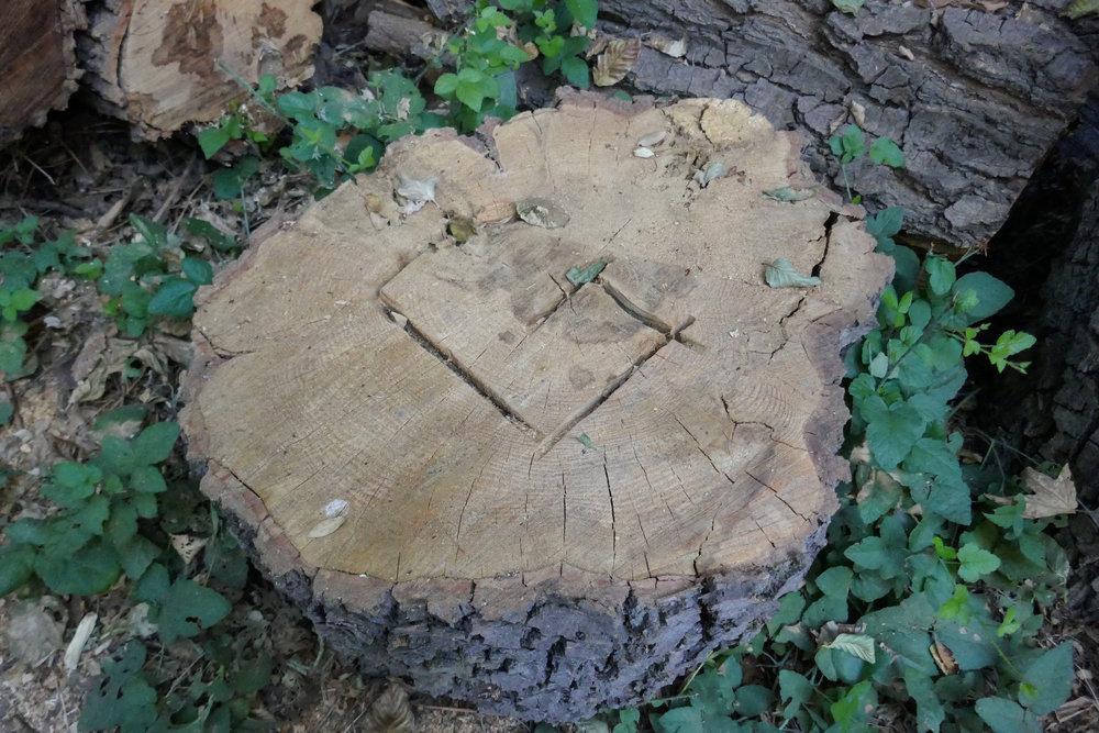 """G"" marks the Gabrielino Trail."
