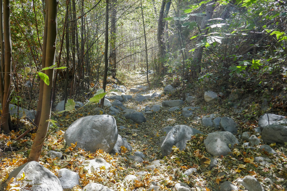 The weather was warm as it usually is in September, but the sunlight and the fallen leaves made it feel like autumn.